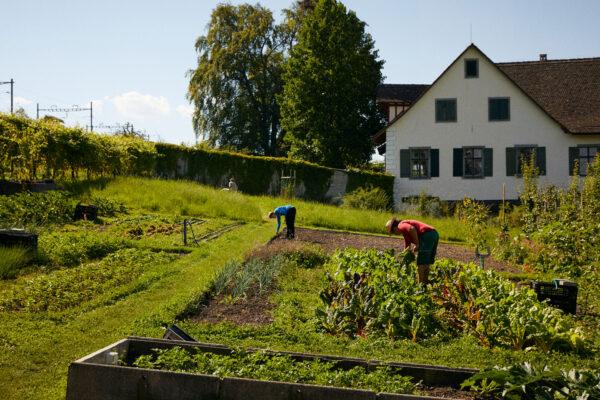 200810_Martin_Stiftung_Produkte-und-Dienstleistungen_Biohof-und-Park_3
