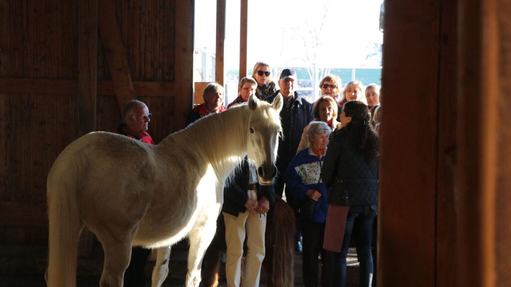 Gruppe der Freiwilligen der Martin Stiftung besucht Bauernhof mit Pferdezucht bei Erlenbach.