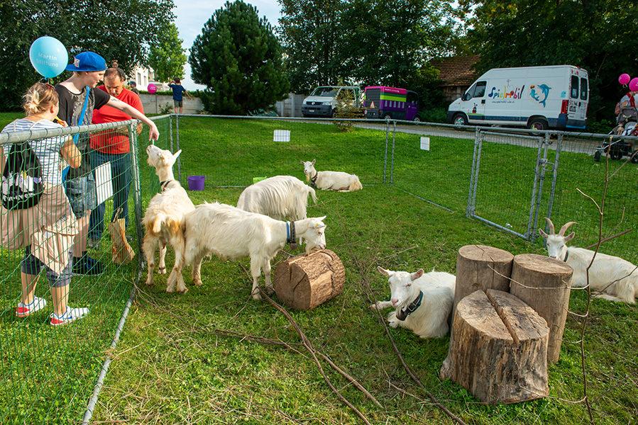 Besucher vom Herbstfest streicheln die Ziegen der Martin Stiftung.