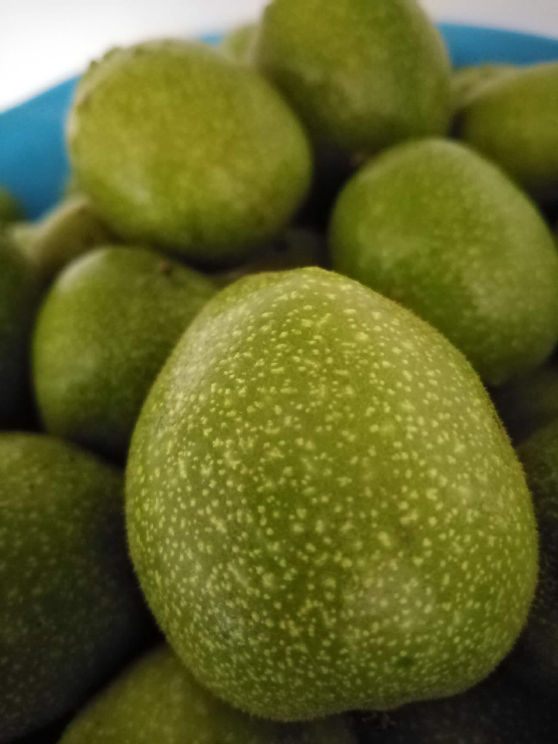 Grüne Baumnüsse werden für die Herstellung des Nocino verwendet.