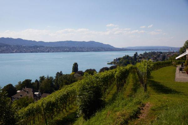 Aussicht vom Rebberg Mariahalden auf den Zürichsee im Sommer.